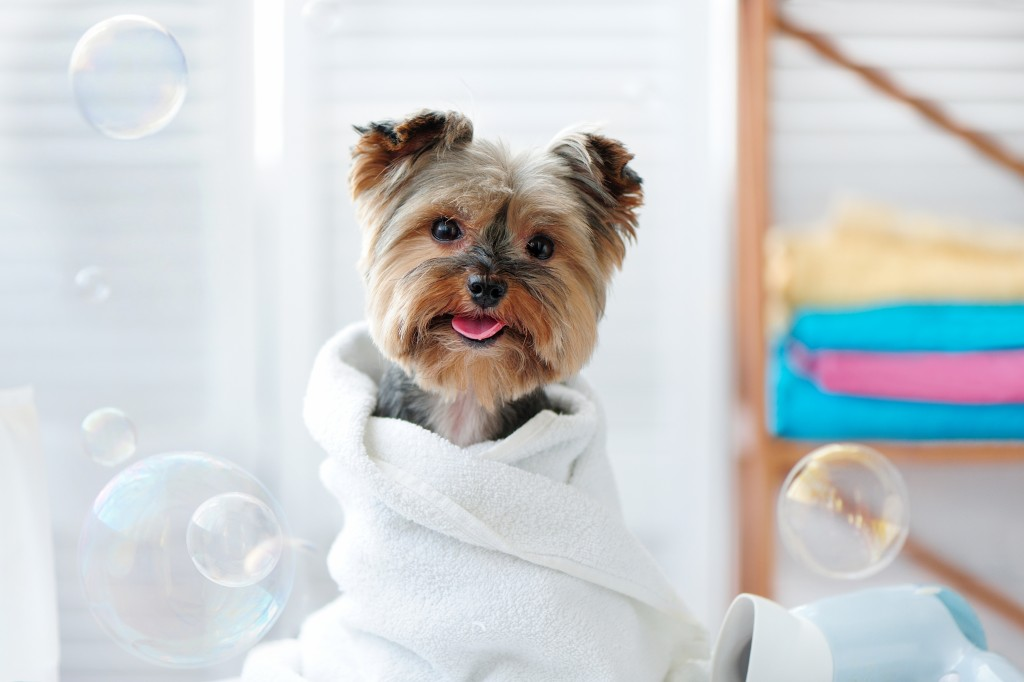 dog wrapped in towel surrounded by bubbles