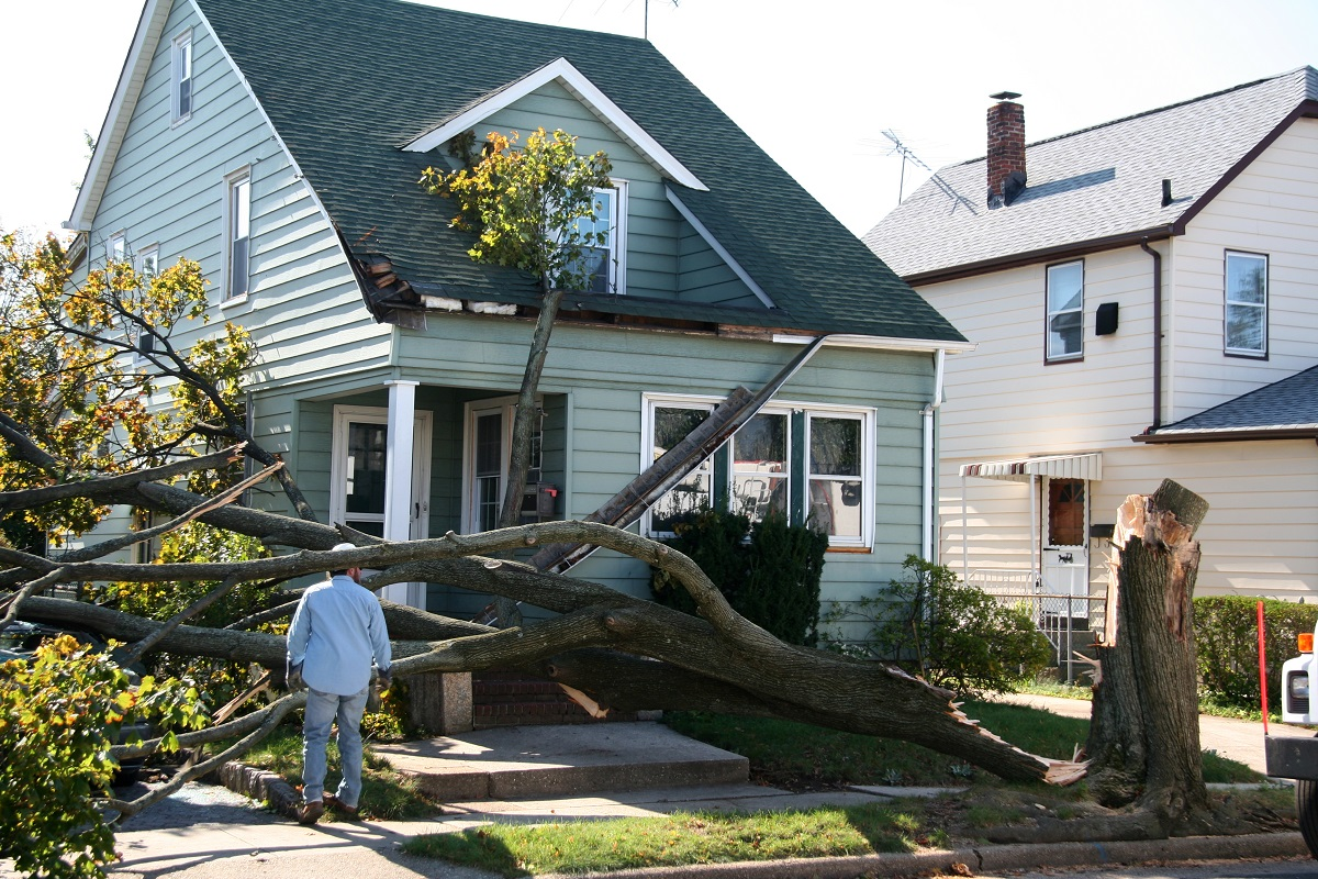 Tree crash in front of house