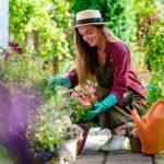 Herbs You Should Grow in Your Garden