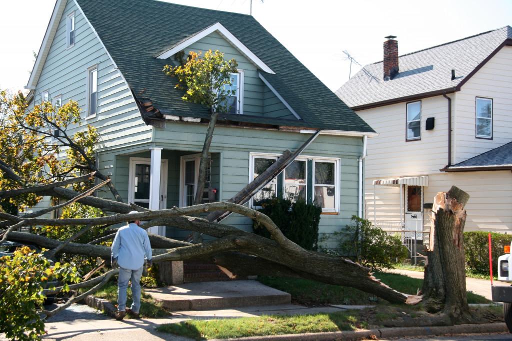 fallen tree at yard